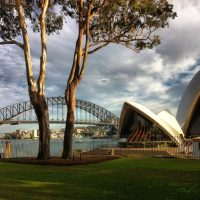 Australian icons, a gum tree, Opera House and Sydney Harbour Bridge