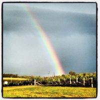 Rainbow over the vineyard