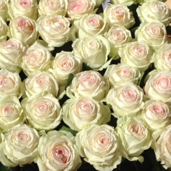 I have expectations of receiving roses but they never arrive!