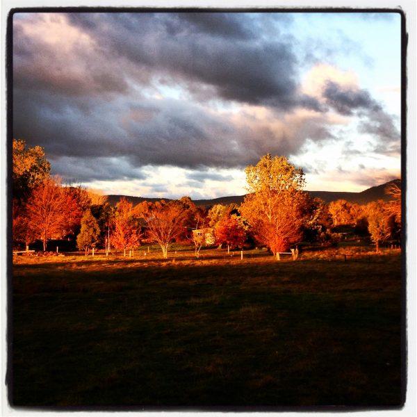 Afternoon sunshine in Autumn