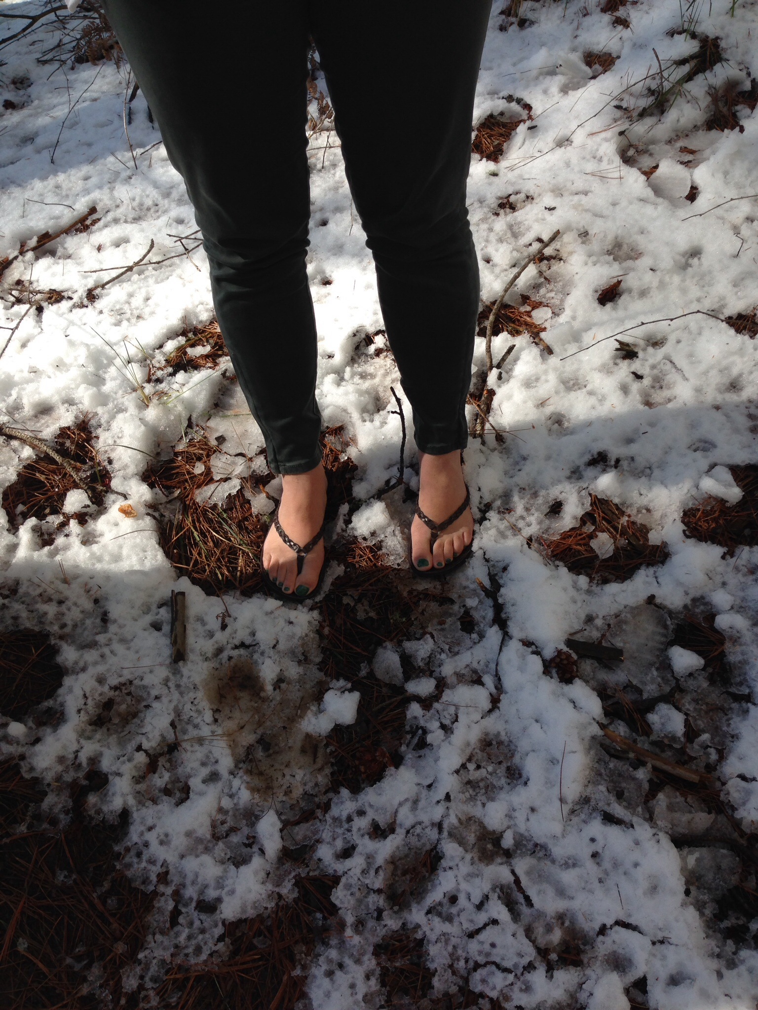 Sugar Pine walk in the snow with flip flops