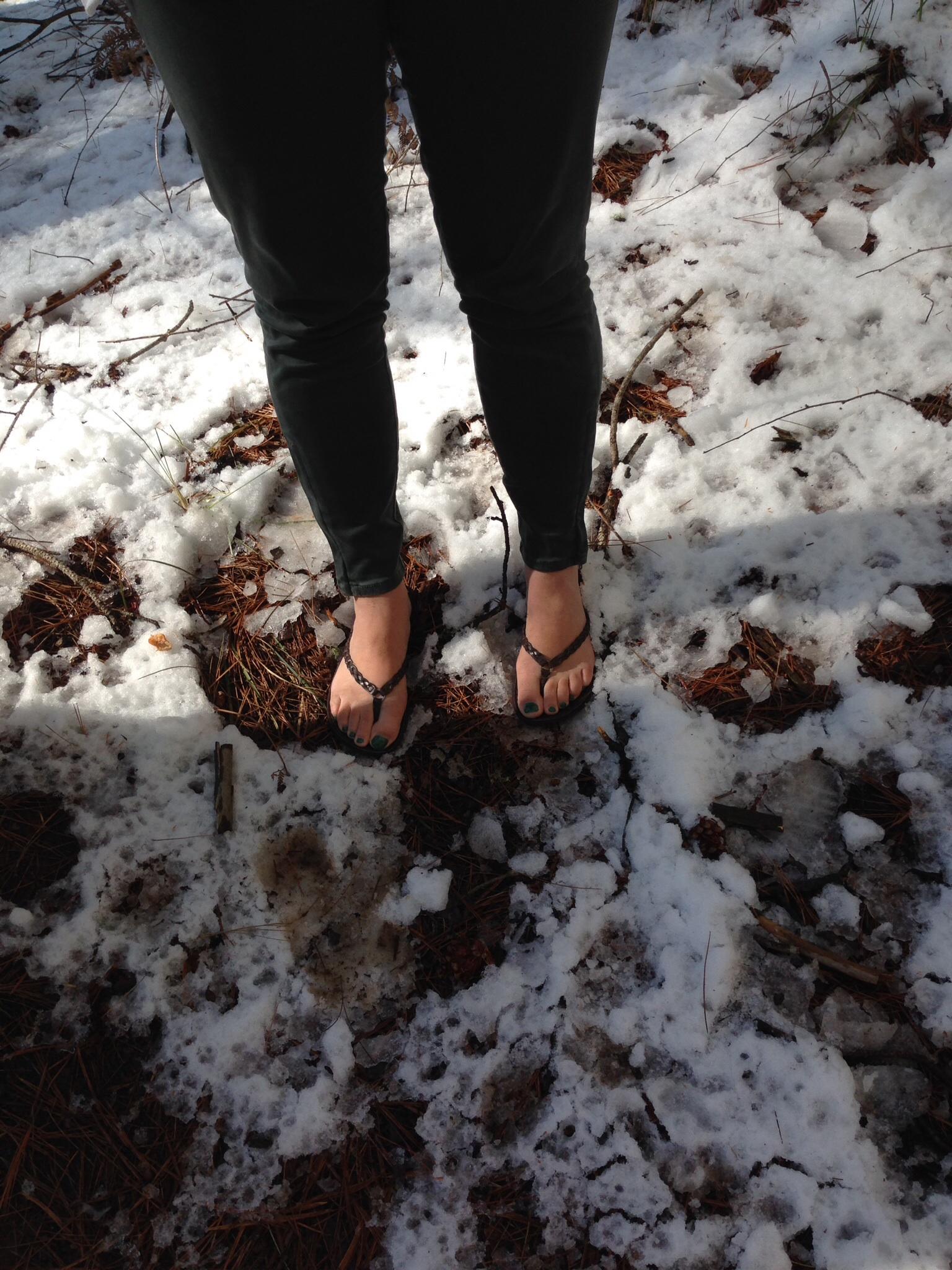 Sugar Pine walk in the snow with flip flops