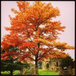 In Glastonbury Abbey