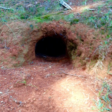 Is anyone home? - a wombat lives here