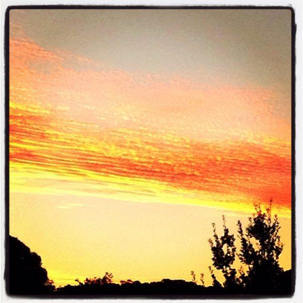 Orange in the sunset