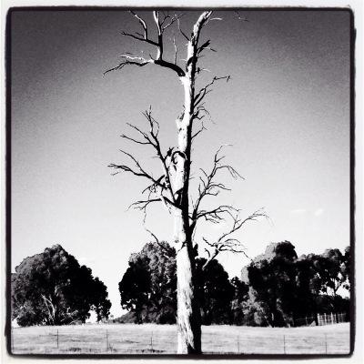 A beautiful dead tree standing tall