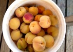 Buckets of fresh peaches