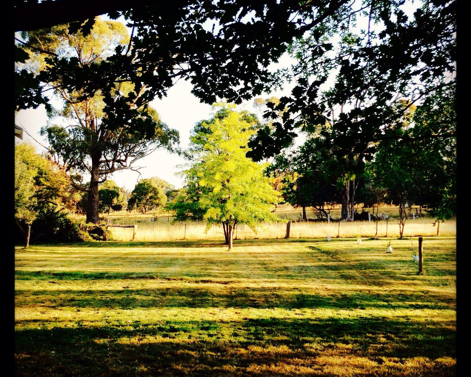 The lawn freshly mown