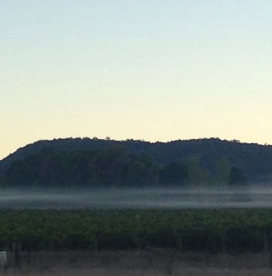 A layer of fog over the vineyard