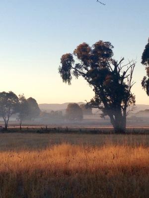 Misty fog and sunlight