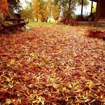 Carpet of colour