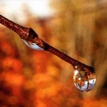 Dew droplet