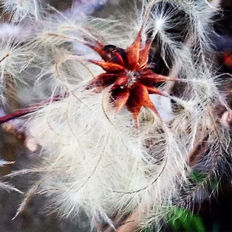 seed flowering