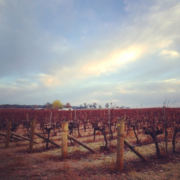Bare vineyard