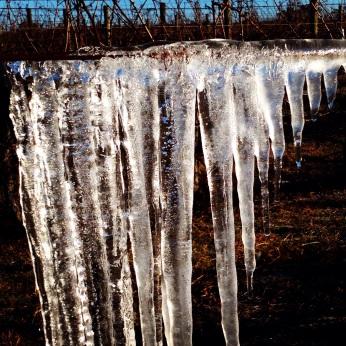 Ice sculpture in the vineyard