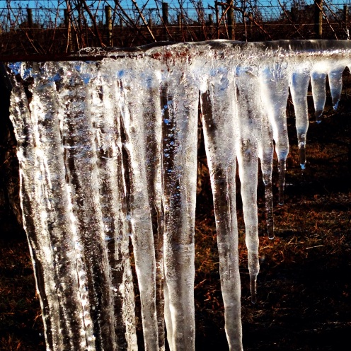 Ice sculpture in the vineyard