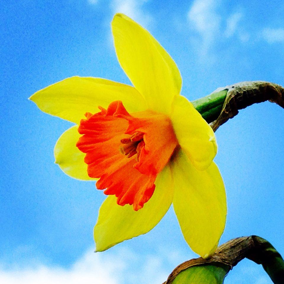 Feeling Mellow Yellow….