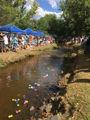 The Duck race in the creek