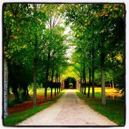 Avenue of autumn colours in Denmark