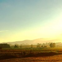 morning light looking over the vineyard