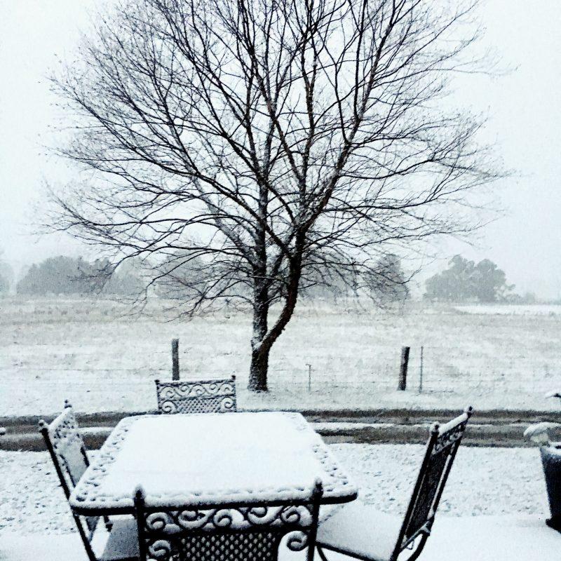 Tree in snow in Tumbarumba