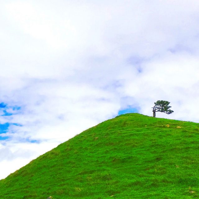 One tree hill in South Island NZ
