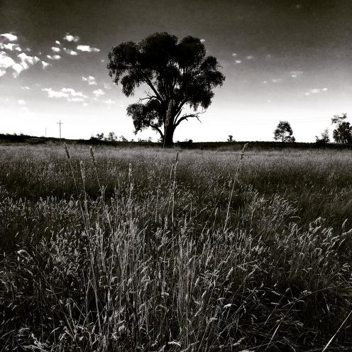 Nightfall in the paddock