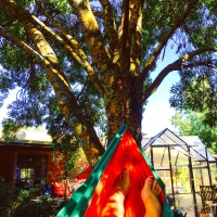 A hammock and a tree - Weekly Photo Challenge