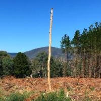 tree, nature, forest, running, blogging