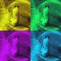Meerkat, animal, zoo, blogging