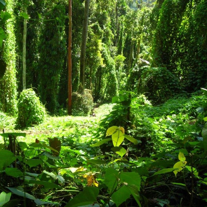 Jungle along the Kokoda Track