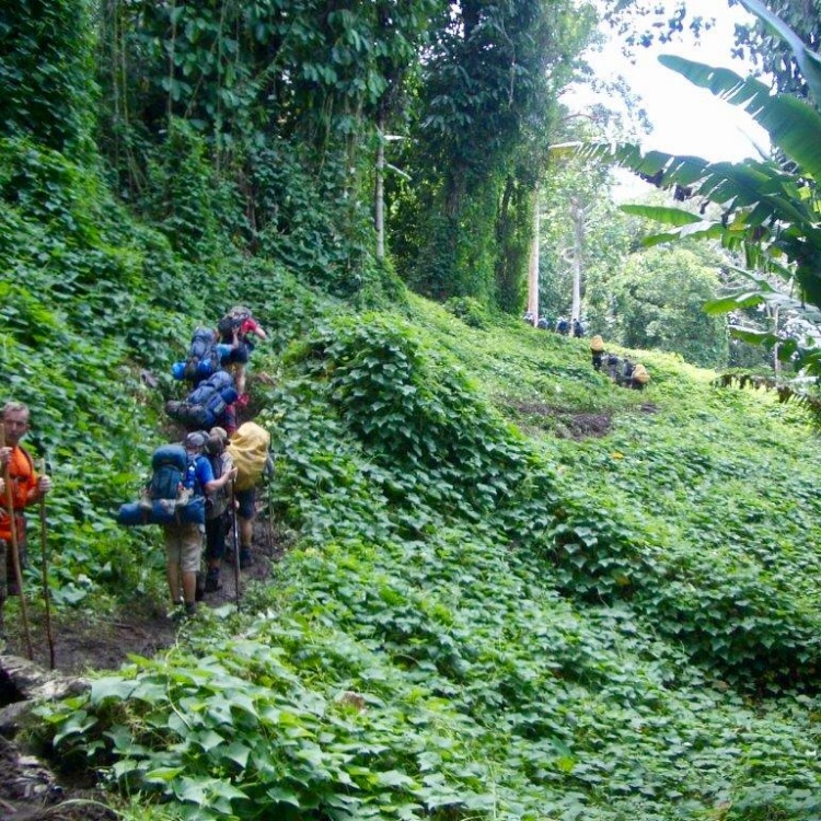 Trekking through the jungle on the Kokoda Track