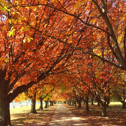 Cycling in Canberra
