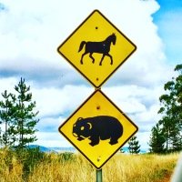 Danger sign for horses and wombats