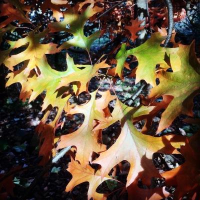 Autumn leaves, colour