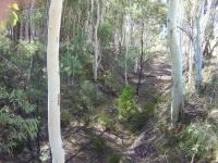 Disused railway corridor overgrown with trees near Tumbarumba wating to be turned into a rail trail for cyclists and walkers