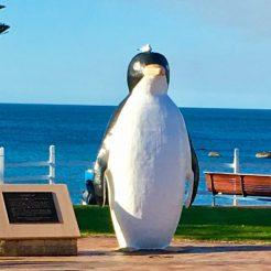 Penguin statue at Penguin Tasmania with seagull on his head