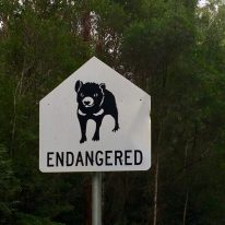 Tasmanian Devil sign