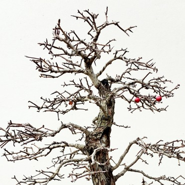 Red seeds on a bonsai tree, bonsai