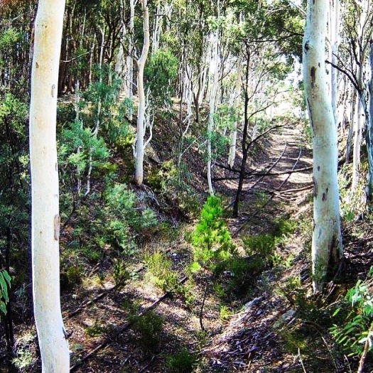 Disused rail corridor in Tumbarumba soon to become a Rail Trail
