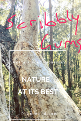 Scribbly gums in the Australian Bush are very interesting trees and deserve a few words for Worth a Word Wednesday!!
