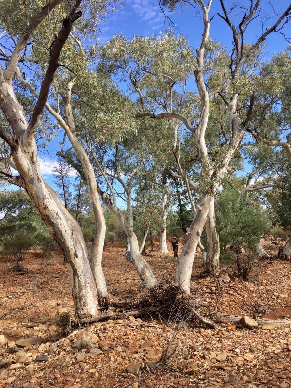 Creek walking in the Flinders Ranges