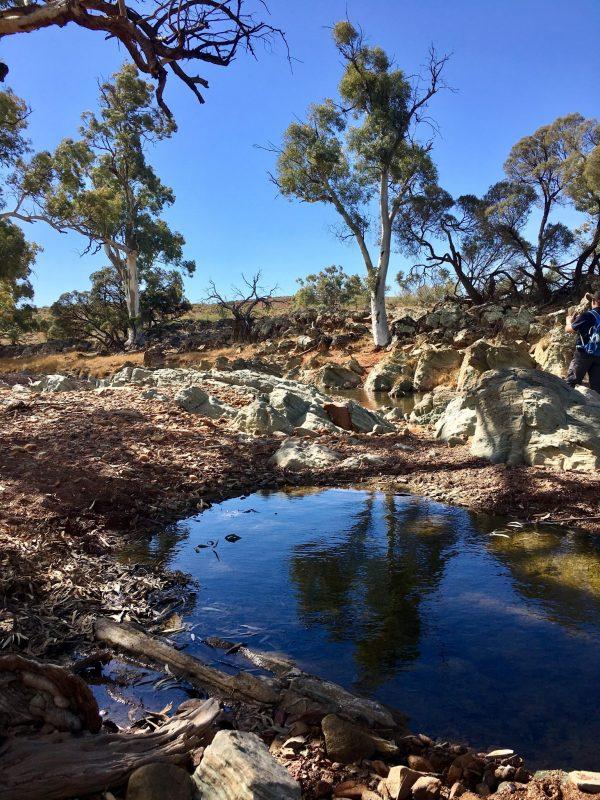 A waterhole along the creek in the Flinders Ranges