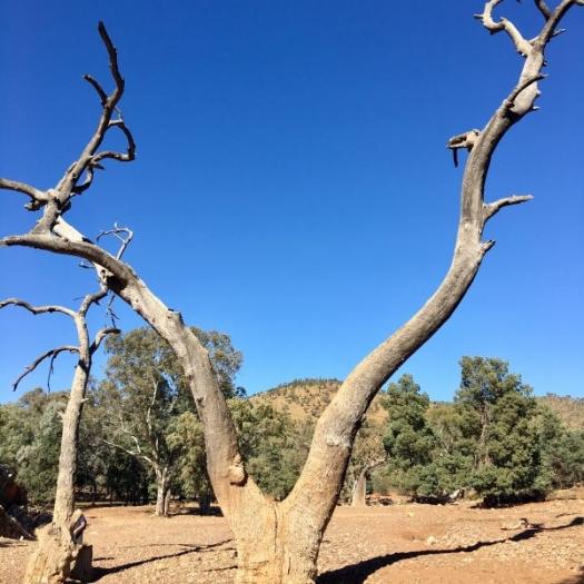Y is it so? in the Flinders Ranges
