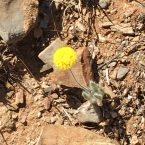 Smiley face in the Flinders Ranges, South Australia