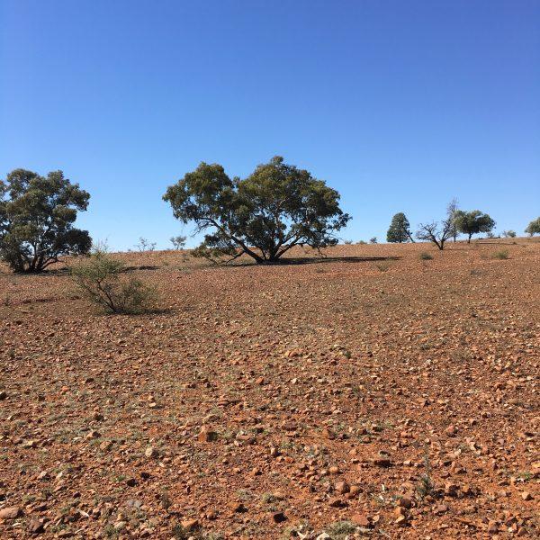 View over paddock in the Flinders Ranges
