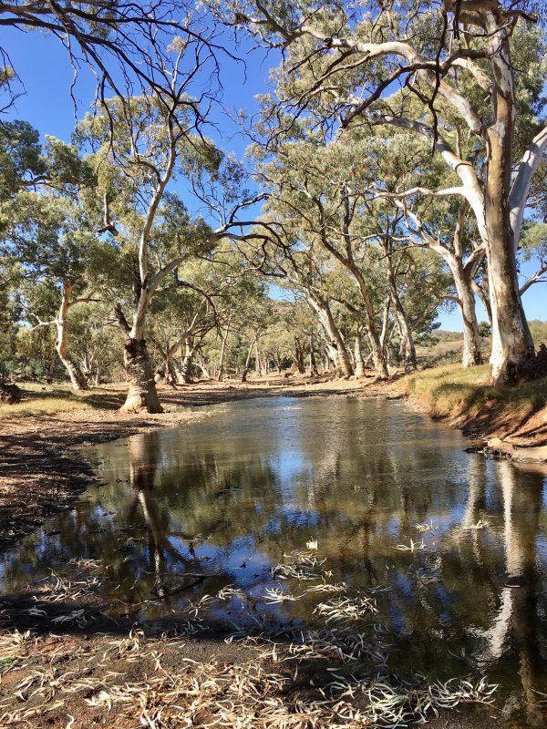 Waterhole in the Flinders Ranges