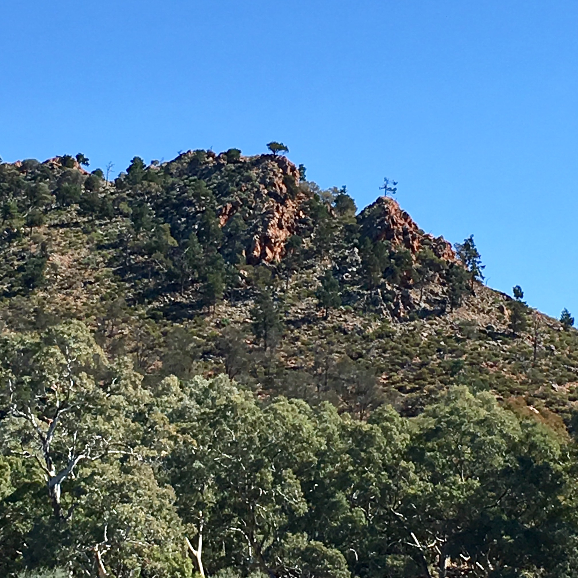 Rocky outcrop along the Frome River in the Flinders Ranges