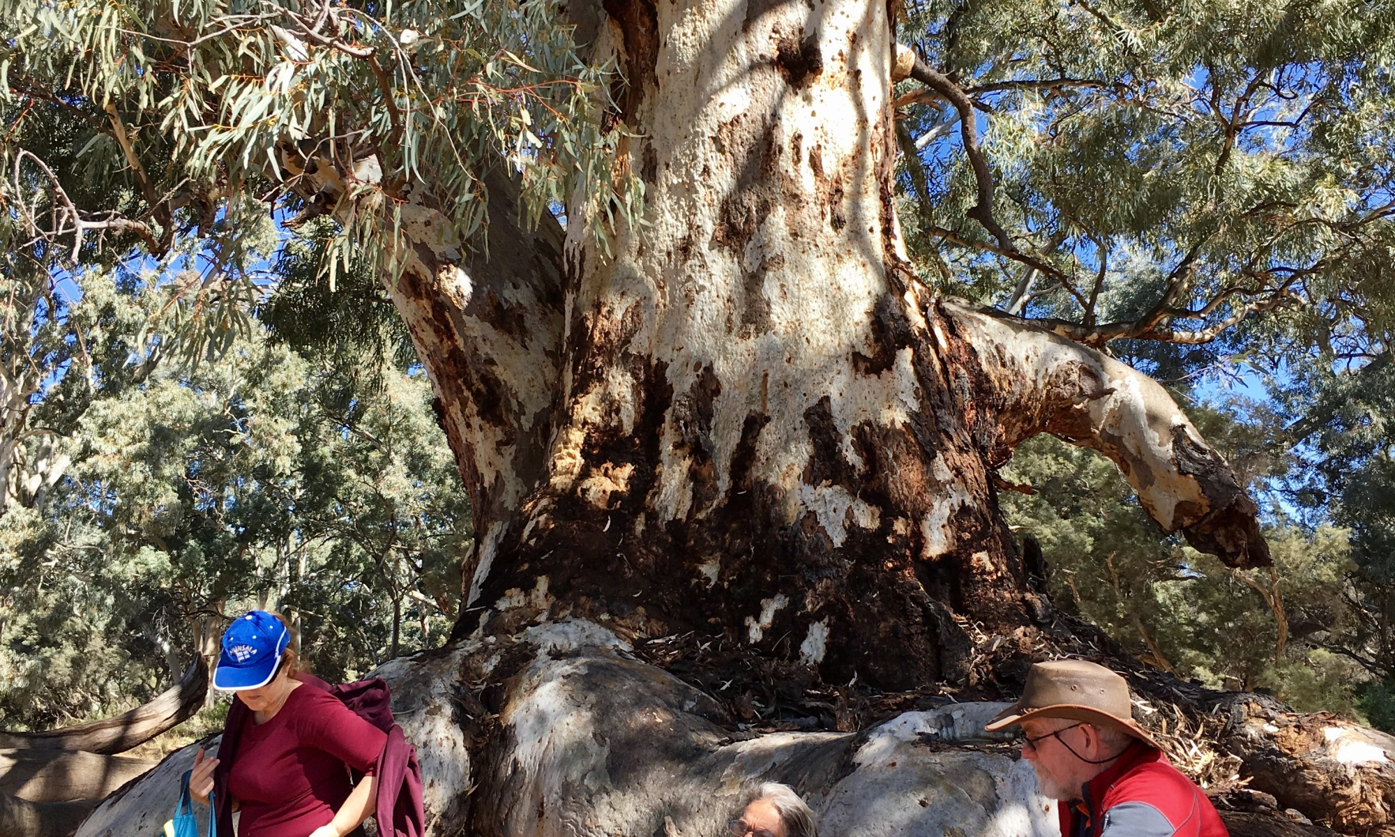 Lunch under this huge old tree