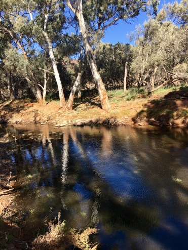 A welcome waterhole along the Frome River in Flinders Ranges